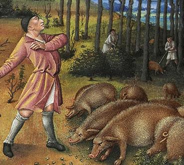 Il maiale nell